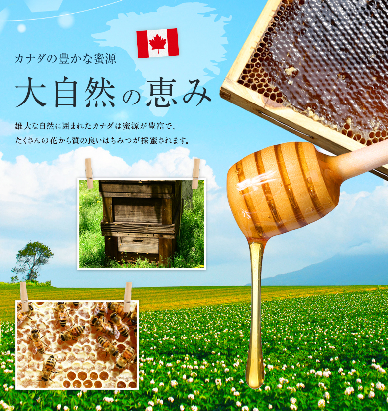 カナダ産ラズベリー蜂蜜