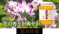 国産レンゲ(蓮華)蜂蜜